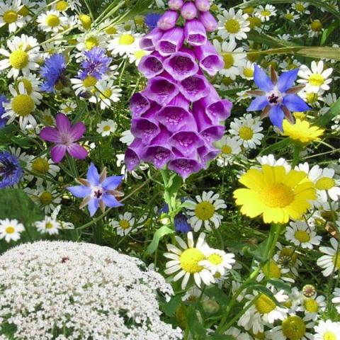 zaadbom - bijen v2 bijenbom met mix van wilde bloemen kabloom